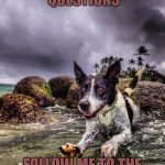 jumping dog | NO TIME FOR QUESTIONS FOLLOW ME TO THE END OF THE BEACH | image tagged in jumping dog | made w/ Imgflip meme maker