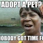 ADOPT A PET? AIN'T NOBODY GOT TIME FOR CAT | image tagged in memes,aint nobody got time for that | made w/ Imgflip meme maker