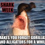 Shark Week | SHARK WEEK MAKES YOU FORGET GORILLAS AND ALLIGATORS FOR A WHILE | image tagged in memes,travelonshark,shark week,funny | made w/ Imgflip meme maker
