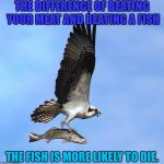 fish | THE DIFFERENCE OF BEATING YOUR MEAT AND BEATING A FISH THE FISH IS MORE LIKELY TO DIE. | image tagged in fish | made w/ Imgflip meme maker