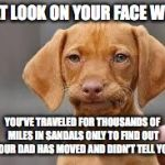 Disappointed Dog Face