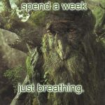 Tree Beard | I used to spend a week just breathing. ( real quote from _Two_ _Towers_ book) | image tagged in tree beard | made w/ Imgflip meme maker