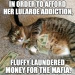 money cat | IN ORDER TO AFFORD HER LULAROE ADDICTION, FLUFFY LAUNDERED MONEY FOR THE MAFIA. | image tagged in money cat | made w/ Imgflip meme maker