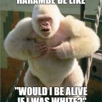 "white gorilla | HARAMBE BE LIKE ""WOULD I BE ALIVE IF I WAS WHITE?"" 