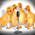 Singing Ducks meme
