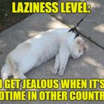 lazy and jealous | LAZINESS LEVEL: I GET JEALOUS WHEN IT'S BEDTIME IN OTHER COUNTRIES | image tagged in lazy cat,bedtime,funny,funny memes | made w/ Imgflip meme maker