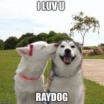 Dogs Kissing | I LUV U RAYDOG | image tagged in dogs kissing | made w/ Imgflip meme maker