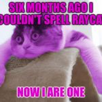 RayCat Stare | SIX MONTHS AGO I COULDN'T SPELL RAYCAT NOW I ARE ONE | image tagged in raycat stare,memes | made w/ Imgflip meme maker