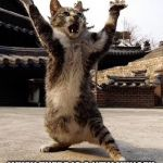 kung fu kitten | THIS IS HOW YOU LOOK LIKE WHEN THERE IS A NEW KUNGFU PANDA MOVIE COMING OUT | image tagged in kung fu kitten | made w/ Imgflip meme maker