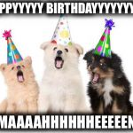happy birthday puppy meme happy birthday puppies Meme Generator   Imgflip happy birthday puppy meme
