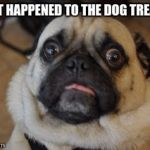 Pug worried | WHAT HAPPENED TO THE DOG TREATS? | image tagged in pug worried | made w/ Imgflip meme maker