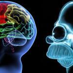 Brain versus Homer Brain Meme Generator - Imgflip