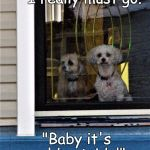 "funny dogs | ""I really must go."" ""Baby it's cold outside!"" 