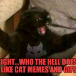 What can I say...? I just love this cat!!! | ALRIGHT...WHO THE HELL DOESN'T LIKE CAT MEMES AND GIFS | image tagged in cat with guns,memes,who the hell,cats,funny,animals | made w/ Imgflip meme maker