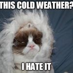 Cold grumpy cat  | THIS COLD WEATHER? I HATE IT | image tagged in cold grumpy cat | made w/ Imgflip meme maker