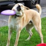 Dog Fail | WAIT WHAT??!! | image tagged in dog fail | made w/ Imgflip meme maker