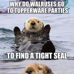 Bad pun otter | WHY DO WALRUSES GO TO TUPPERWARE PARTIES TO FIND A TIGHT SEAL | image tagged in bad pun otter | made w/ Imgflip meme maker