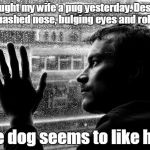 Over Educated Problems Meme | I bought my wife a pug yesterday. Despite the squashed nose, bulging eyes and rolls of fat the dog seems to like her. | image tagged in memes,over educated problems | made w/ Imgflip meme maker
