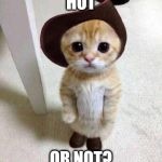 Cute Cat | HOT OR NOT? | image tagged in cute cat | made w/ Imgflip meme maker