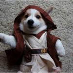 Star wars corgi meme