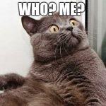 Image result for shocked cat meme