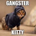 Hoody Cat Meme | GANGSTER KITTY | image tagged in memes,hoody cat | made w/ Imgflip meme maker