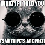 Morpheus Cat | WHAT IF I TOLD YOU TENANTS WITH PETS ARE PREFERABLE | image tagged in morpheus cat | made w/ Imgflip meme maker