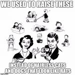 Big Family Comeback Meme | WE USED TO RAISE THESE INSTEAD OF HAIRLESS CATS AND DOGS THAT LOOK LIKE RATS | image tagged in memes,big family comeback | made w/ Imgflip meme maker