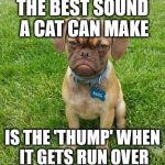 Grumpy Dog | THE BEST SOUND A CAT CAN MAKE IS THE 'THUMP' WHEN IT GETS RUN OVER | image tagged in grumpy dog,dogs vs cats | made w/ Imgflip meme maker