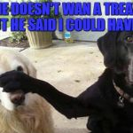 Dogs | HE DOESN'T WAN A TREAT BUT HE SAID I COULD HAVE IT | image tagged in dogs | made w/ Imgflip meme maker
