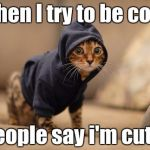 Hoody Cat Meme | When I try to be cool. People say i'm cute. | image tagged in memes,hoody cat | made w/ Imgflip meme maker