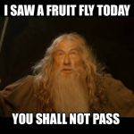 Gandalf - you shall not pass | I SAW A FRUIT FLY TODAY YOU SHALL NOT PASS | image tagged in gandalf - you shall not pass | made w/ Imgflip meme maker