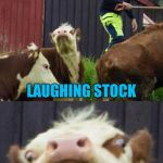 Bad pun cow  | WHAT DO YOU CALL COWS THAT HAVE A SENSE OF HUMOR LAUGHING STOCK | image tagged in bad pun cow | made w/ Imgflip meme maker