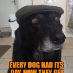 Every dog has its day - Dog Week - A tiger.leo Event | BACK IN MY DAY EVERY DOG HAD ITS DAY, NOW THEY GET A WEEK. SPOILED BRATS. | image tagged in back in my day dog,tigerleo,dog week,animals,dogs,memes | made w/ Imgflip meme maker