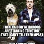 Ryan Gosling dog | I'M AFRAID MY NEIGHBORS ARE STARTING TO NOTICE THAT I CAN'T TELL THEM APART BUT I GREET EACH OF THEIR DOGS BY NAME | image tagged in ryan gosling dog | made w/ Imgflip meme maker