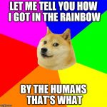 Advice Doge Meme | LET ME TELL YOU HOW I GOT IN THE RAINBOW BY THE HUMANS THAT'S WHAT | image tagged in memes,advice doge | made w/ Imgflip meme maker