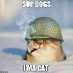 War Cat | SUP DOGS I'MA CAT | image tagged in war cat | made w/ Imgflip meme maker