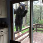 Bear At The Door meme