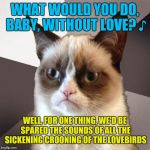Musically Malicious Grumpy Cat | WHAT WOULD YOU DO, BABY, WITHOUT LOVE? ♪ WELL, FOR ONE THING, WE'D BE SPARED THE SOUNDS OF ALL THE SICKENING CROONING OF THE LOVEBIRDS | image tagged in musically malicious grumpy cat,grumpy cat | made w/ Imgflip meme maker