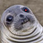 Awkward Moment -  Red Team Cyborg Anthropologist Sea Lion meme