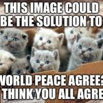 box of cats | THIS IMAGE COULD BE THE SOLUTION TO WORLD PEACE AGREE? I THINK YOU ALL AGREE | image tagged in box of cats | made w/ Imgflip meme maker