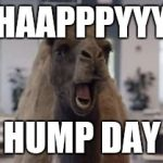 Hump Day Camel | HAAPPPYYY HUMP DAY | image tagged in hump day camel | made w/ Imgflip meme maker