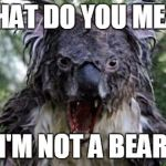Angry Koala Meme | WHAT DO YOU MEAN I'M NOT A BEAR | image tagged in memes,angry koala | made w/ Imgflip meme maker