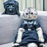Darth Cat meme