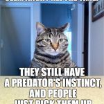 Take A Seat Cat Meme | EVER WONDER WHY CATS SEEM ANGRY ALL THE TIME? THEY STILL HAVE A PREDATOR'S INSTINCT, AND PEOPLE JUST PICK THEM UP AND CUDDLE WITH THEM | image tagged in memes,take a seat cat | made w/ Imgflip meme maker