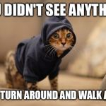 Hoody Cat Meme | YOU DIDN'T SEE ANYTHING JUST TURN AROUND AND WALK AWAY | image tagged in memes,hoody cat | made w/ Imgflip meme maker