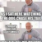AS I SAT HERE WATCHING THE DOG CHASE HIS TAIL I THOUGHT DOGS ARE EASILY AMUSED THEN I REALIZED I WAS WATCHING THE DOG CHASE HIS TAIL | image tagged in memes,hide the pain harold,repost,reposts,stolen memes week | made w/ Imgflip meme maker