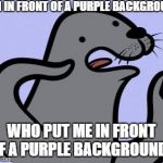 Homophobic Seal Meme | I'M IN FRONT OF A PURPLE BACKGROUND WHO PUT ME IN FRONT OF A PURPLE BACKGROUND? | image tagged in memes,homophobic seal | made w/ Imgflip meme maker