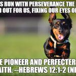 1u17ba dog running meme generator imgflip,Dog Running Meme