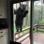 Door Bear Calling! meme